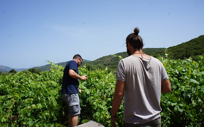 ithaca-culture-vineyard-tour