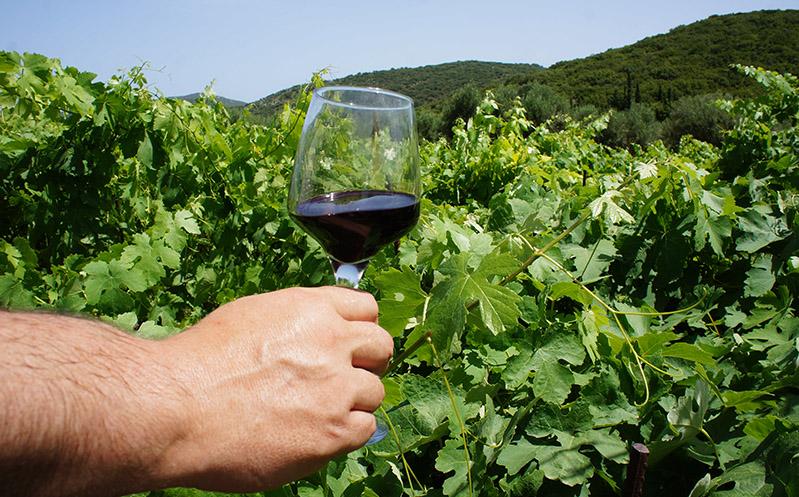 ithaca-culture-vineyard-tour